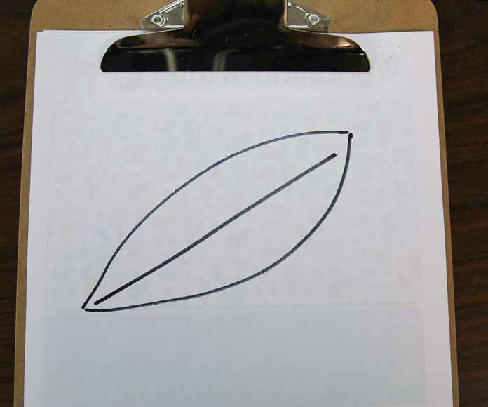 Leaf shape with a boring straight line through the middle